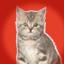 listing cat
